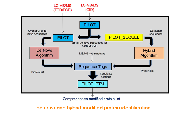 de novo and hybrid modified protein identification